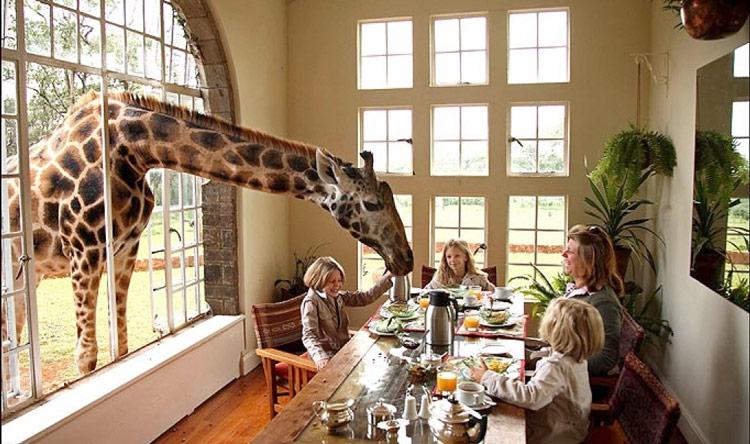 Giraffe Manor, Nairobi,Kenya