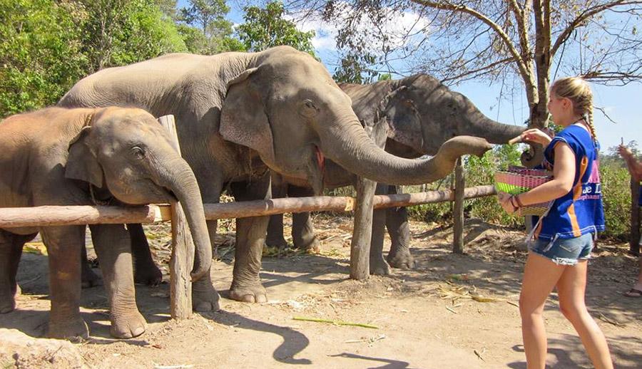 chiang-mai-elephant-daily-care_thailand004